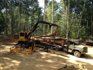 FSC certified Hardwood